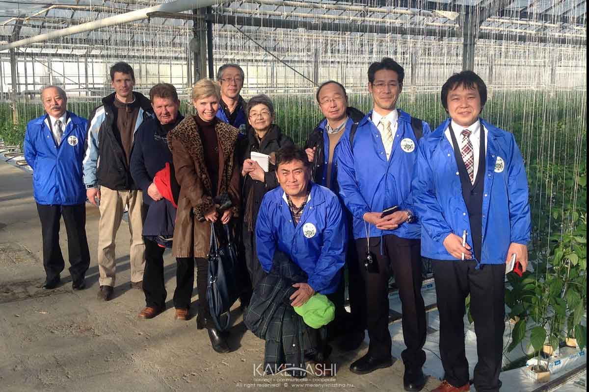 With gardeners in greenhouse at Szentes